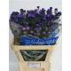 Chpu Small Santini Purple Chrysanthemum