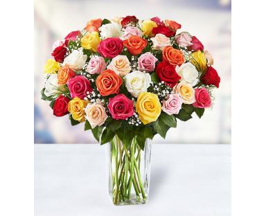 48 Multicolor Roses