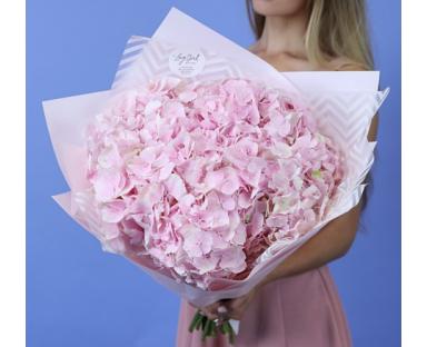 10 Pink Hydrangea