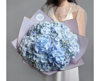 10 Blue Hydrangea