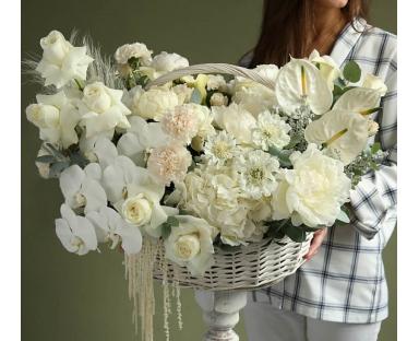 70 White Tulips