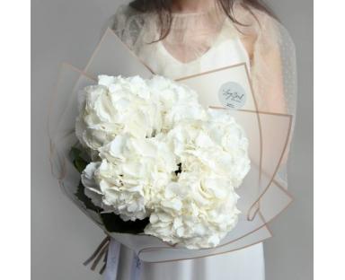 10 White Hydrangea