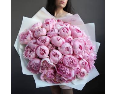 50 Pink Peonies