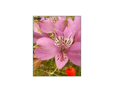 Alpu Alstroemeria Purple
