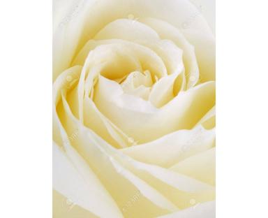 Rocr Rose Cream
