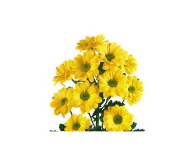 Chye Daisy Chrysanthenum Green yellow Romahka