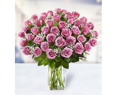 48 Purple Roses