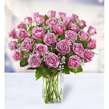 36 Purple Roses